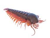 Sanctacaris marine arthropod, illustration
