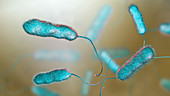 Legionnaire's disease bacteria, illustration