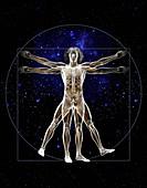 Vitruvian man, illustration