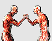 Male anatomical models arm wrestling, illustration