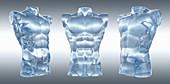 Three anatomical models of male torsos, illustration