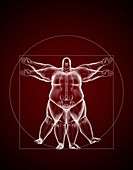 Overweight Vitruvian Man, illustration