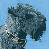 Scottish Terrier dog, illustration