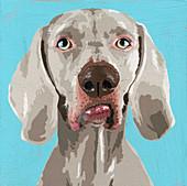 Weimaraner dog, illustration