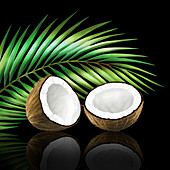 Coconut in two halves with coconut leaf, illustration