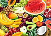Lots of different fruit, illustration