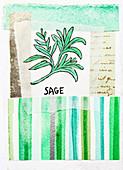 Sage, illustration
