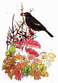Blackbird in autumn, illustration