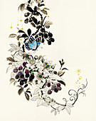 Butterflies on blackberry bush, illustration