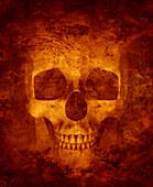 Close up of skull, illustration