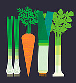 Fresh vegetables in a row, illustration