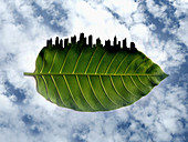 City skyline on the edge of green leaf, illustration