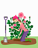 Woman planting rose bush in garden, illustration
