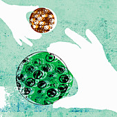 Close up of hands holding petri dishes, illustration
