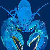 lobster, illustration