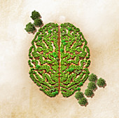 Green trees forming brain, illustration
