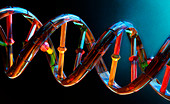DNA double helix, illustration