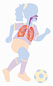 Respiratory system of girl playing football, illustration