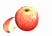 Royal Gala apples, illustration