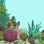 Sea urchins and sea life on the seabed, illustration