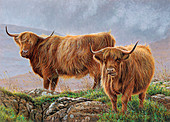 Highland cattle in rugged moorland, illustration