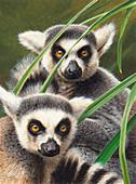 Two ring-tailed lemurs, illustration
