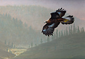 Golden eagle flying over misty valley, illustration