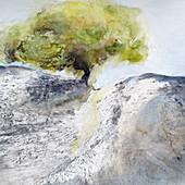 Single tree growing from rock, illustration