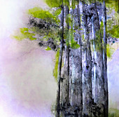 Group of trees, illustration