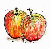Jonagold apples, illustration