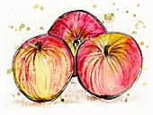 Three Jonagold apples, illustration