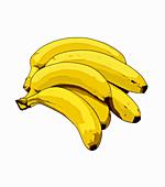 Bunch of bananas, illustration