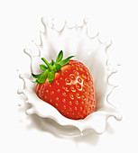 Fresh strawberry splashing in cream, illustration