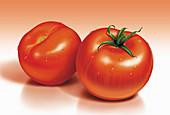 Fresh tomatoes, illustration