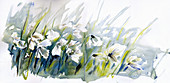Cotton grass blowing in wind, illustration