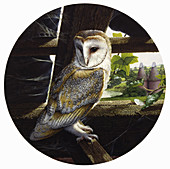 Barn owl perching in old barn in countryside, illustration