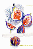Whole and halved fresh figs, illustration