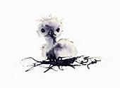 Chick in nest, illustration