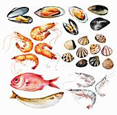 Seafood, illustration