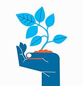 Hand holding seedling, illustration