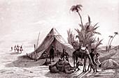 Desert oasis, 19th century