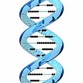 Genetics and mathematics, conceptual image