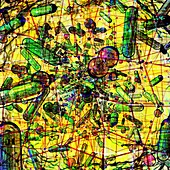 Microbiota, conceptual illustration