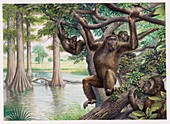 Dryopithecus extinct ape, illustration