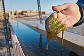Algae research