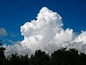 Cumulus congestus clouds over trees
