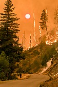 Oregon wildfire, August 2018