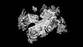 Sodium chloride crystallization