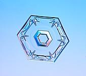 Hexagonal plate snowflake, light micrograph