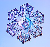 Rimed sectored plate snowflake, light micrograph